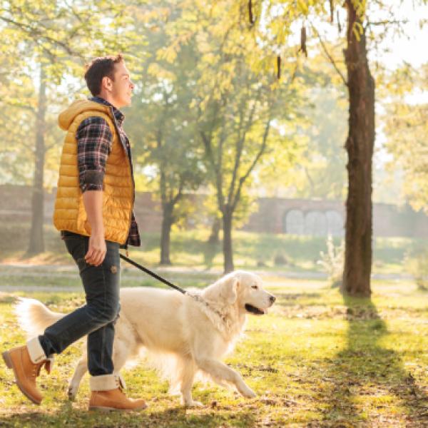 paseo de perros santiago