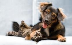 amigos perro y gato