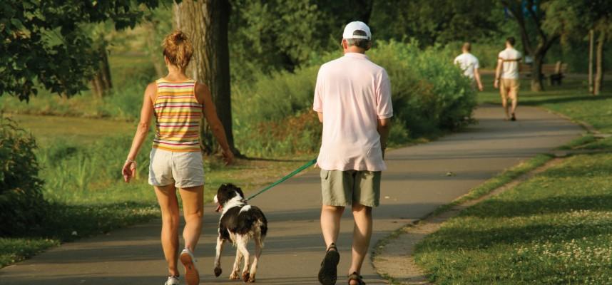 implementos paseo perro