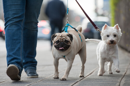 paseos-con-tu-perro