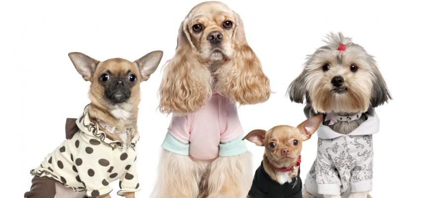 ropa-para-perros-pequeños