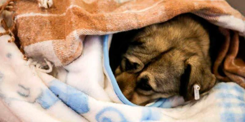 perro-frio2
