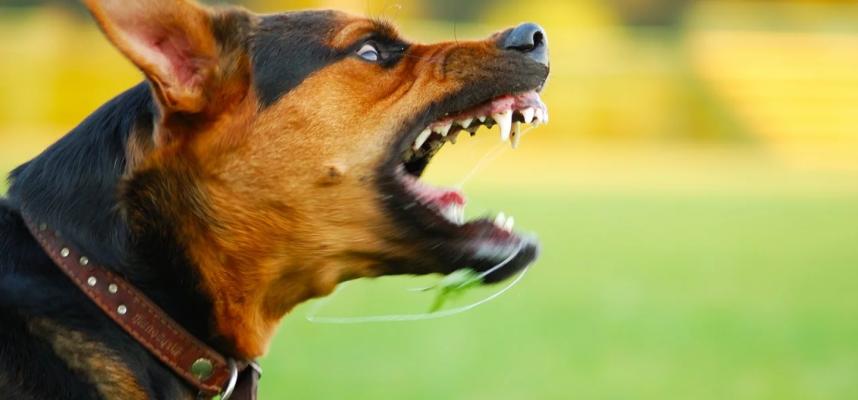 Pelea de perros, perro mostrando dientes